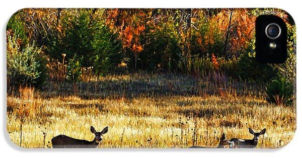Burnt Umber iPhone 5 Cases - Deer Autumn iPhone 5 Case by Bill Kesler