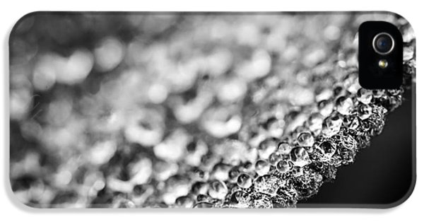 Dewdrop iPhone 5 Cases - Dew drops on leaf edge iPhone 5 Case by Elena Elisseeva