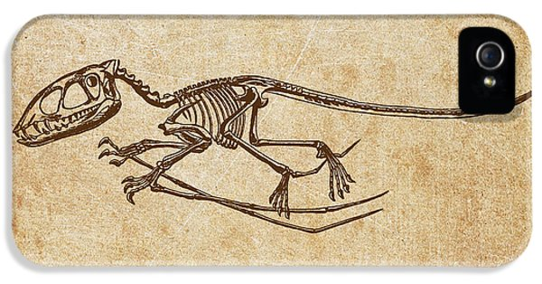 Dinosaur Pterodactylus IPhone 5 / 5s Case by Aged Pixel