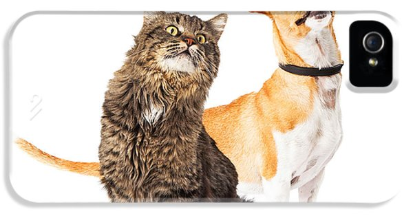 Indoors iPhone 5 Cases - Dog and Cat Looking Up Together iPhone 5 Case by Susan  Schmitz