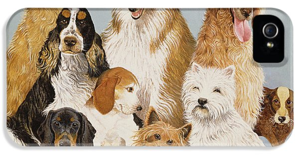 Scottie iPhone 5 Cases - Dogs Dinner Oil On Canvas iPhone 5 Case by Pat Scott