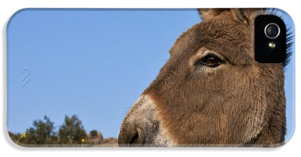 Donkey iPhone 5 Cases - Donkey In Greece iPhone 5 Case by Jean-Louis Klein and Marie-Luce Hubert