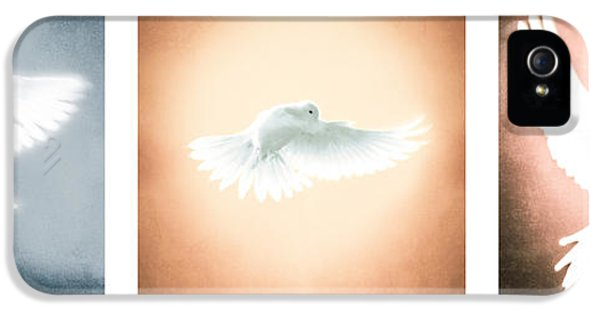 Dove iPhone 5 Cases - Dove In Flight Triptych iPhone 5 Case by Yo \Pedro