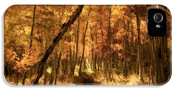 Foliage iPhone 5 Cases - Down the Golden Path iPhone 5 Case by Donna Kennedy