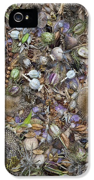 Echinops iPhone 5 Cases - Dried Flower Seeds iPhone 5 Case by Tim Gainey