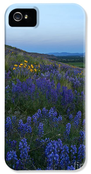 Lupine iPhone 5 Cases - Dusk over Lupine iPhone 5 Case by Mike  Dawson