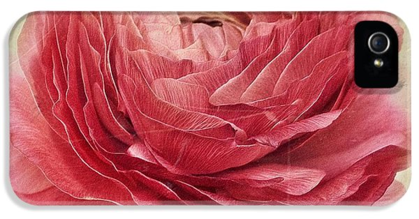 Spring iPhone 5 Cases - Dusty Pink iPhone 5 Case by Priska Wettstein