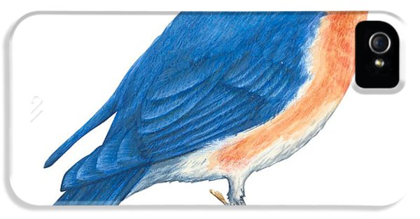 Eastern Bluebird IPhone 5 / 5s Case by Anonymous