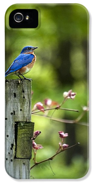 State Bird iPhone 5 Cases - Eastern Bluebird iPhone 5 Case by Christina Rollo