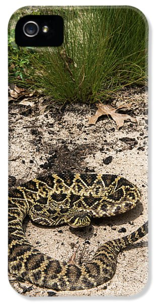 Eastern Diamondback Rattlesnake IPhone 5 / 5s Case by Pete Oxford