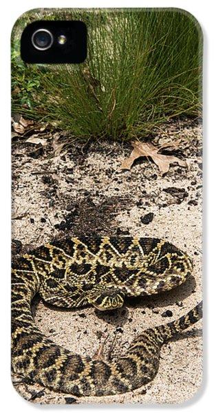 Eastern Diamondback Rattlesnake IPhone 5 / 5s Case by Pete Oxford