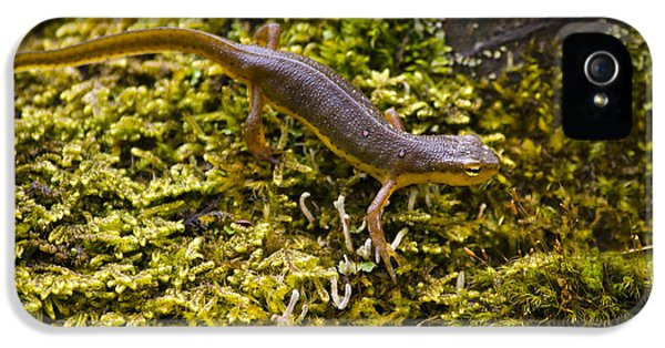 Eastern Newt Aquatic Adult IPhone 5 / 5s Case by Christina Rollo