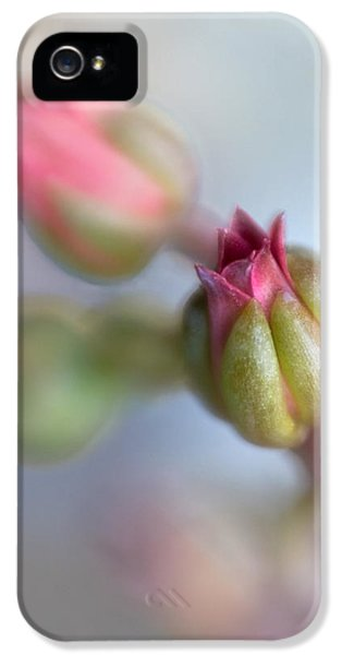 Lensbaby Macro iPhone 5 Cases - Echeverias II iPhone 5 Case by David and Carol Kelly