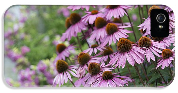 Echinacea iPhone 5 Cases - Echinacea Purpurea Rubinglow iPhone 5 Case by Tim Gainey