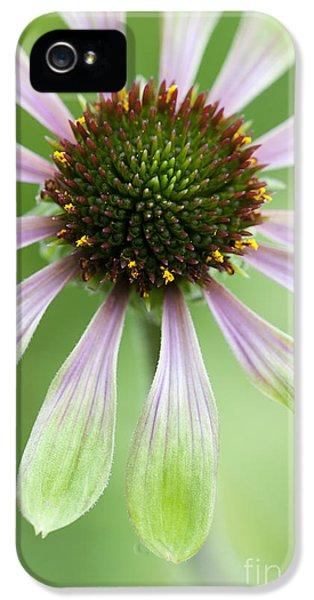 Echinacea iPhone 5 Cases - Echinacea Green Envy Flower iPhone 5 Case by Tim Gainey
