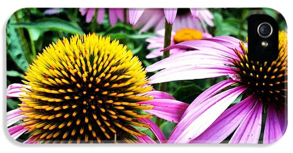 Echinacea iPhone 5 Cases - Echinacea iPhone 5 Case by Jeff Klingler