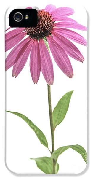 Echinacea iPhone 5 Cases - Echinacea purpurea flower iPhone 5 Case by Elena Elisseeva