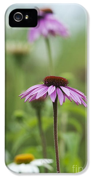 Echinacea iPhone 5 Cases - Echinacea Purpurea Magnus  iPhone 5 Case by Tim Gainey