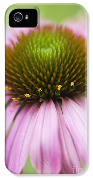 Echinacea iPhone 5 Cases - Echinacea Purpurea Rubinglow Coneflower iPhone 5 Case by Tim Gainey