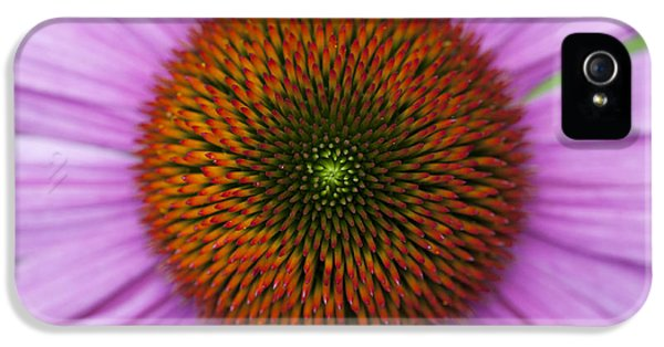Echinacea iPhone 5 Cases - Echinacea Purpurea Rubinglow flowers iPhone 5 Case by Tim Gainey