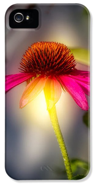 Echinacea iPhone 5 Cases - Echinacea Sunrise iPhone 5 Case by Bob Orsillo