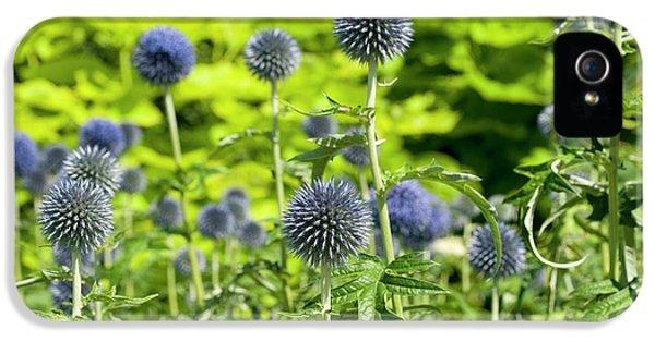 Echinops Bannaticus 'taplow Blue' IPhone 5 / 5s Case by Bjanka Kadic