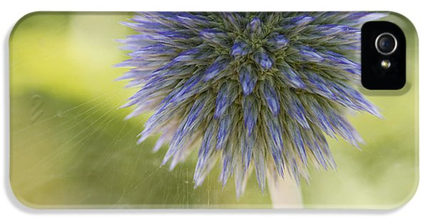 Ritro iPhone 5 Cases - Echinops Blue iPhone 5 Case by Diane Fifield