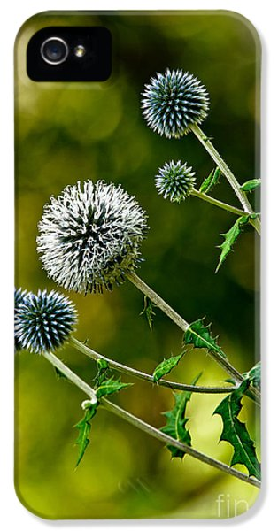 Echinops iPhone 5 Cases - Echinops Pictures 7 iPhone 5 Case by World Wildlife Photography