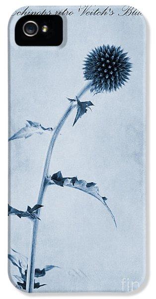 Ritro iPhone 5 Cases - Echinops ritro Veitchs Blue Cyanotype iPhone 5 Case by John Edwards