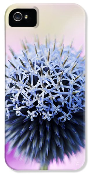 Ritro iPhone 5 Cases - Echinops Ritro Veitchs Blue flower iPhone 5 Case by Tim Gainey