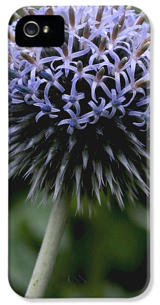 Echinops iPhone 5 Cases - Echinops iPhone 5 Case by Susan Leake