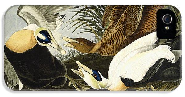 Eider Ducks IPhone 5 / 5s Case by John James Audubon