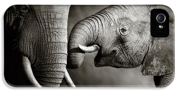 Artistic iPhone 5 Cases - Elephant affection iPhone 5 Case by Johan Swanepoel