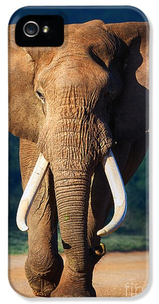 Elephant iPhone 5 Cases - Elephant approaching iPhone 5 Case by Johan Swanepoel