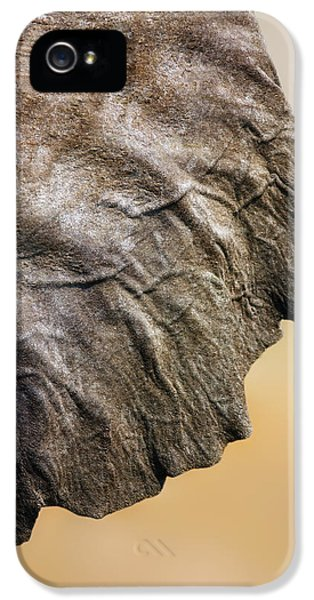 Textures iPhone 5 Cases - Elephant ear close-up iPhone 5 Case by Johan Swanepoel