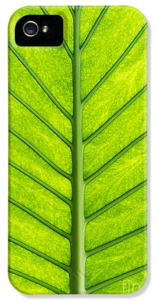 Poisonous iPhone 5 Cases - Elephant Ear Taro Leaf Pattern iPhone 5 Case by Tim Gainey