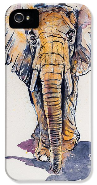 Elephant In Gold IPhone 5 / 5s Case by Kovacs Anna Brigitta