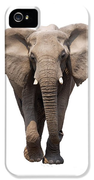 Elephant Isolated IPhone 5 / 5s Case by Johan Swanepoel
