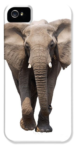 Cut-out iPhone 5 Cases - Elephant isolated iPhone 5 Case by Johan Swanepoel