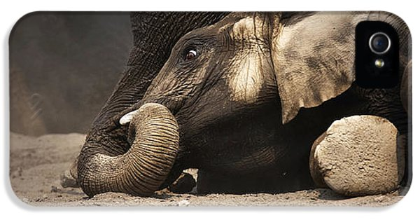 Play iPhone 5 Cases - Elephant - lying down iPhone 5 Case by Johan Swanepoel