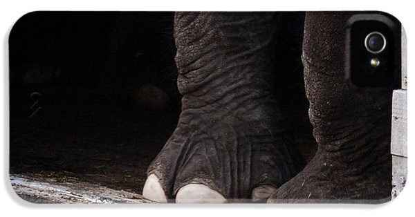 Eyeball iPhone 5 Cases - Elephant Toes iPhone 5 Case by Bob Orsillo