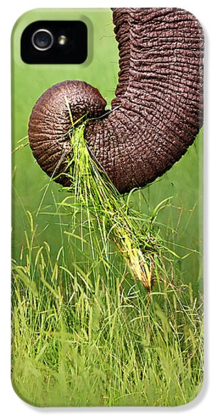 Close Up iPhone 5 Cases - Elephant trunk pulling grass iPhone 5 Case by Johan Swanepoel