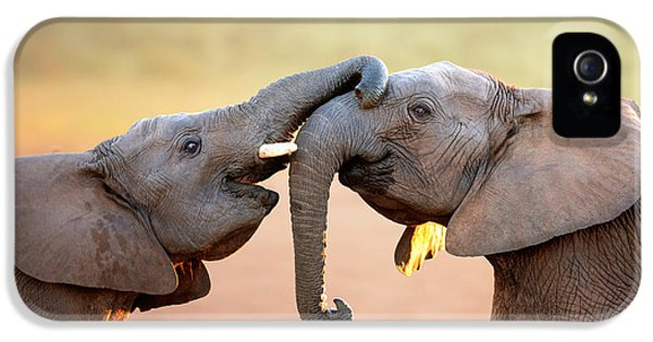 National iPhone 5 Cases - Elephants touching each other iPhone 5 Case by Johan Swanepoel