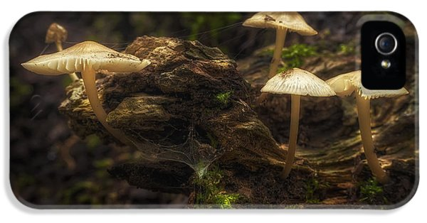 Spotlight iPhone 5 Cases - Enchanted Forest iPhone 5 Case by Scott Norris