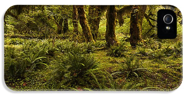 Forrest iPhone 5 Cases - Enchantment iPhone 5 Case by Mark Kiver