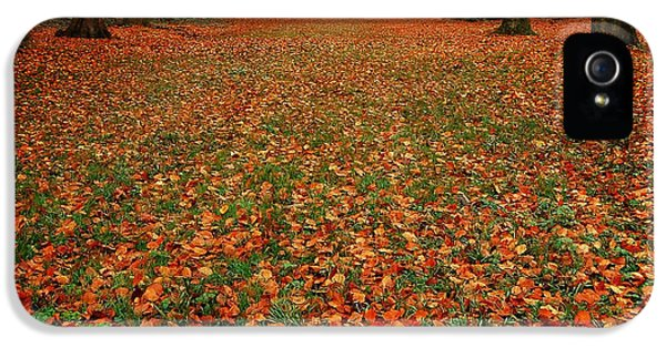 Forrest iPhone 5 Cases - Endless Autumn iPhone 5 Case by Photodream Art