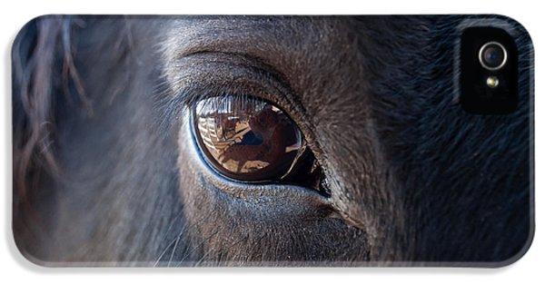Horse iPhone 5 Cases - Equine In Sight iPhone 5 Case by Sheryl Cox