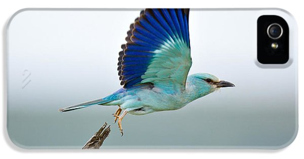 Avian iPhone 5 Cases - Eurasian Roller iPhone 5 Case by Johan Swanepoel