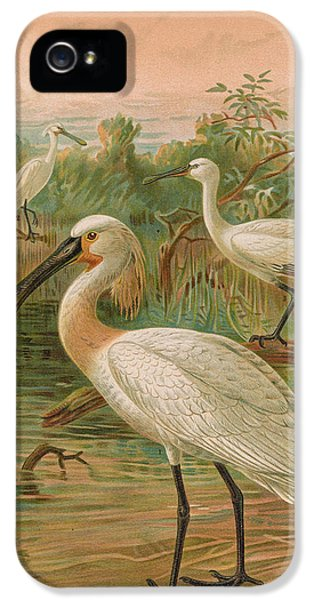 Eurasian Spoonbill IPhone 5 / 5s Case by J G Keulemans