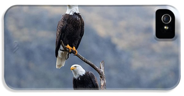 American Bald Eagle iPhone 5 Cases - Ever Watchful iPhone 5 Case by Mike Dawson